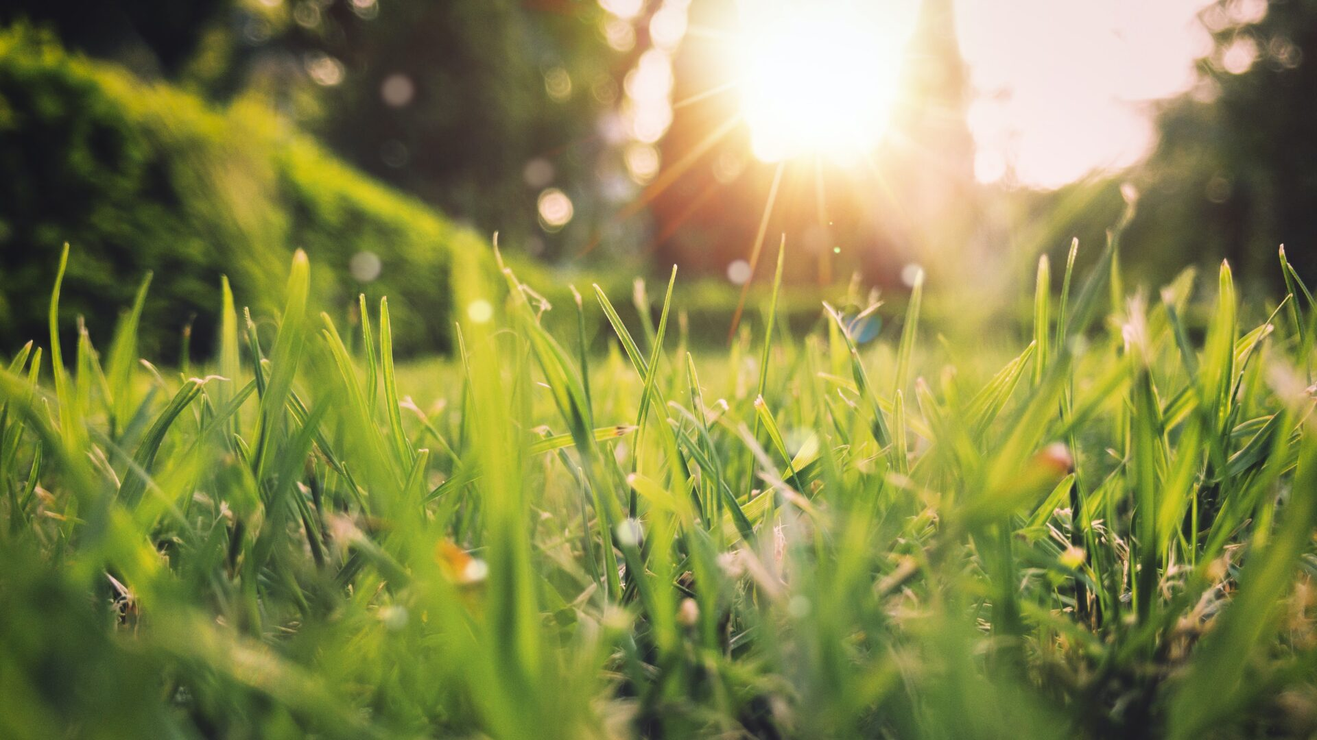 Picture of green grass and sunshine for blog on preparing your HVAC for Spring